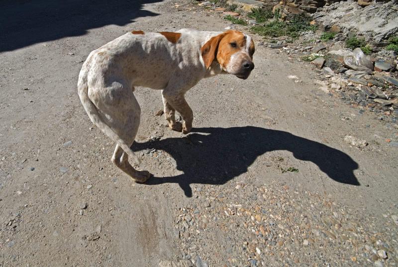 Sobre mascotas abandonadas - Novedades para mascotas ...