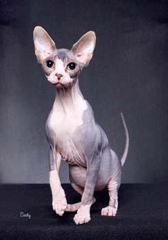 gatos pelo: