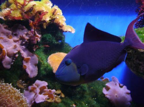 Peces para nuestro acuario for Alimento para peces acuario
