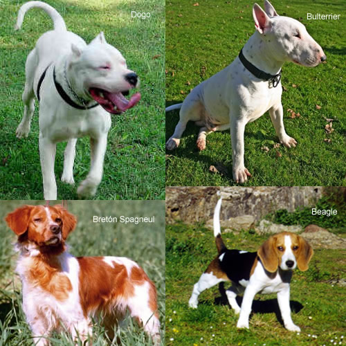 Lo que quer as saber sobre mascotas - Pienso para perros de caza ...