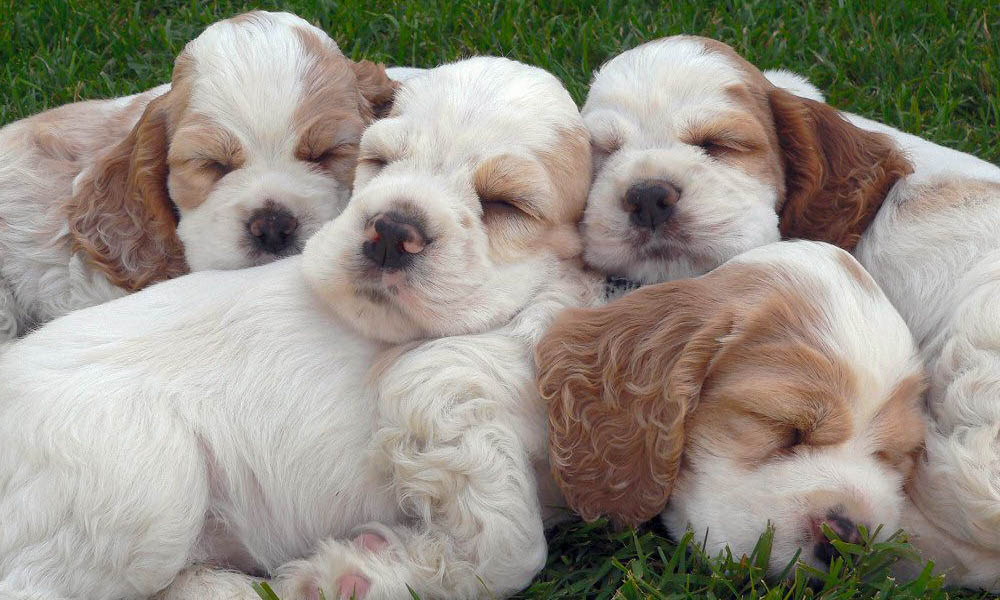 Compra un cachorro de la raza que quieras - Novedades para mascotas ...